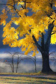 Morning Maple in Autumn. Taken on Beaver Lake in Asheville, NC