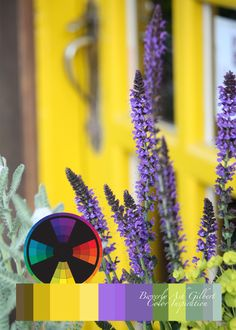 Color Inspiration, Yellow door with purple salvia, color wheel, color palette, Artful Color for Creative Projects