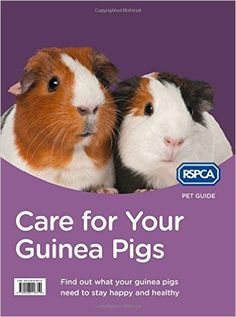 Care for Your Guinea Pigs (RSPCA Pet Guide): Amazon.co.uk: RSPCA: 9780008118310: Books
