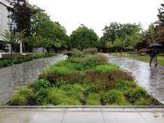 Inspiratie> regenwater stroomt naar het groen. | planning.ubc.ca
