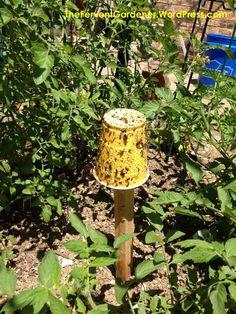 Bonsai Initiative 100% True Coffee Bean Bonsai 5 Pcs Tropical Bonsai Tree Plant,perennial Green Vegetable Fruit Coffee Tree Plant For Home Garden