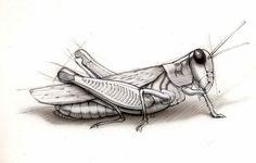 Grasshopper Animals, Art, Art Background, Animales, Animaux, Kunst, Animal, Performing Arts, Animais