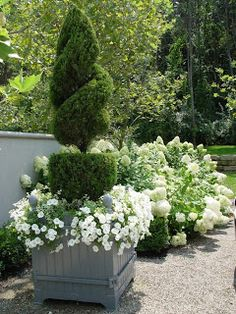 topiary juniper and white petunias - Garden Maxx Garden Landscaping, Charleston Gardens, Beautiful Gardens, Garden Containers, Classic Garden, Plants, Urban Garden, Planting Flowers, White Gardens
