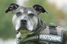 Biotonne, Playboy, Süßer oder Kuschelterrorist... Welches Schlagwort steht auf dem Hundegeschirr eures Vierbeiners?  Foto: Manja Elsässer