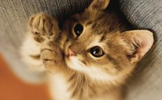 Até você descobrir o que significa amar um animal, não entenderá o que é a nobreza e o despertar de emoções que podem vir a curar a alma. Dar amor a um cão