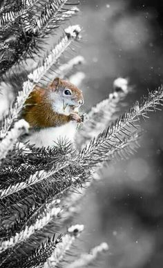 Squirrel in snow cute animals outdoors nature winter snow squirrel Winter Szenen, Winter Love, Winter Magic, Winter Christmas, Christmas Squirrel, Cottage Christmas, Winter Trees, Christmas Vacation, Long Winter