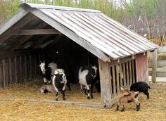 Goat Barn idea