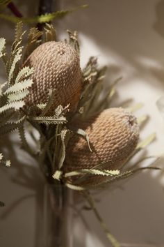 dried banksia flowers