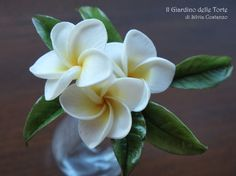 Sugarpaste Plumeria flowers. In my town Palermo, in Sicily, there are lots of plumeria trees that in summer are full of flowers! The Plumeria flowers are the symbol of my town! :) :)