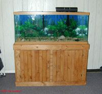 Aquarium stand for a 75 gallon tank. Easy to change for a larger or smaller tank. Saltwater Tank, Saltwater Aquarium, Aquarium Fish, Aquarium Ideas, Diy Furniture Projects, Diy Projects, Furniture Plans, 75 Gallon Aquarium Stand, Fish Tank Cabinets