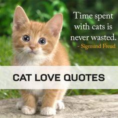 Cat Love Quotes, Cats, Animals, Gatos, Animales, Animaux, Animal, Cat, Animais