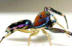 The Trippy Rainbow Spider of Psychadelica Land : The Featured Creature