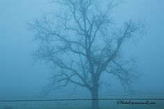 Tree standing tall in the fog