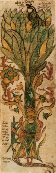 """Yggdrasil est l'Arbre du Monde dans la mythologie nordique. Son nom signifie littéralement """"Destrier du Redoutable"""", le Redoutable (Ygg) désignant le dieu Odin. Sur lui reposent les neuf royaumes, Ásgard, Midgard, Jötunheim, Nibelheim, etc. - """"AM 738 4to"""" ou """"Edda oblongata"""" est un manuscrit islandais daté d'environ 1680. Il contient 13 pages avec 23 illustrations de la mythologie nordique. Il est aujourd'hui à la charge de l'Institut Árni Magnússon, à Reykjavik."""