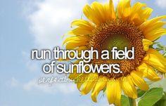 Run through a field of sunflowers
