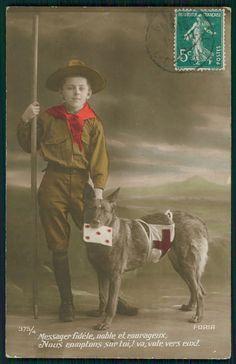 Boy scot & Red Cross German shepherd War dog ww1 WWI old c1915 Photo postcard