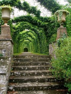 "Achieve this with acacia trees hanging over the walkway. ""Just pinned! New to our Glorious Gardens board: Ancient Walkway, Birr Castle, Ireland photo via cathy (Blue Pueblo)"""