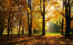 Free Scenery Wallpaper – Shows a Typical Autumn Scene, Bound to Look Amazing on the Device! Autumn Wallpaper Hd, New Nature Wallpaper, Background Hd Wallpaper, Scenery Wallpaper, Tree Wallpaper, Landscape Wallpaper, Cool Wallpaper, Beautiful Wallpaper, Widescreen Wallpaper