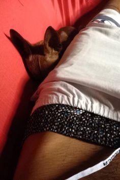 Ted dorminhoco