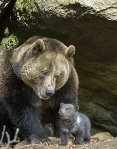 Proud Mama by Klaus Kreuzer on 500px ( I didn't know bears could smile, but this one sure is.)