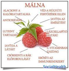 Életmód cikkek és képtár: Zöldség és gyümölcsök hatásai Smoothie Fruit, Smoothie Recipes, Health Eating, Medicinal Plants, Natural Health, Health Tips, Herbalism, Raspberry, Health Fitness