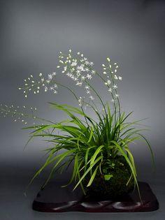 Ikebana 生け花 插花 Asian style flower arrangement