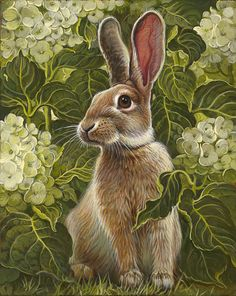 Scent of Hydrangeas is a oil painting by Yana Movchan, 10 x 8 inches, of a brown and buff rabbit in close-up among the green leaves and white blossoms of a hydrangea plant. Animal Paintings, Animal Drawings, Art Drawings, Easter Drawings, Bunny Art, Cute Bunny, Art And Illustration, Rabbit Illustration, Rabbit Art