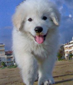 http://jackilyn.hubpages.com/hub/Cute-Pictures-Of--Puppies