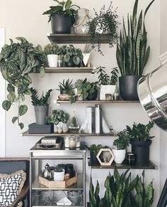 A new Pasadena boutique is dedicated to nothing but indoor house plants Room With Plants, House Plants Decor, Office With Plants, Indoor Garden, Indoor Plants, Home And Garden, Plantas Indoor, Decoration Plante, Plant Shelves