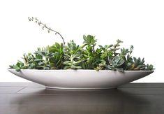 Eine moderne Deko aus Sukkulenten können Sie aus Teller oder Schalen gestalten