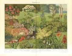 1905 Garden Flowers Ornamental Plants Antique