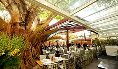 "Rubaiyat restaurant in Sao Paulo. Perfect Brazilian ""Schnitzel"" under the huge tree..."
