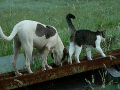 Follow the leader #3: Bubba, Sally 9/15/07 by robert_rvnwd on flickr