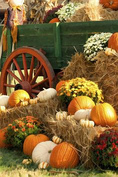 Colorful Fall Pumpkin Display Photography by Eazl, Brown Fall Pumpkins, Halloween Pumpkins, Fall Halloween, Halloween Halloween, Vintage Halloween, Halloween Makeup, Halloween Costumes, Outside Fall Decorations, Halloween Decorations