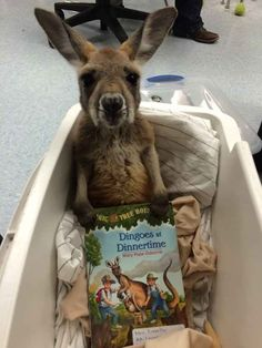 And this joey who's ready for his bedtime story.