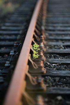 Life on the tracks..............