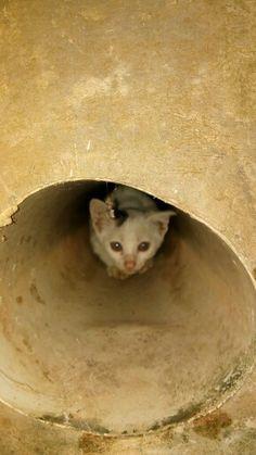 Kitten or Mouse?