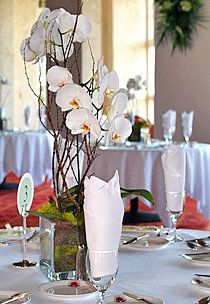 single potted white orchid