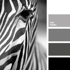 DCS en noir et blanc