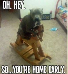 Funny Animal Pictures - View our collection of cute and funny pet videos and pics. New funny animal pictures and videos submitted daily. Animals And Pets, Baby Animals, Funny Animals, Cute Animals, Animal Memes, I Love Dogs, Cute Dogs, Pit Bull Love, Funny Animal Pictures