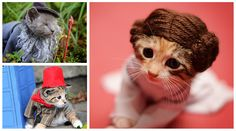 Photographer dresses kittens as film and television characters to help the find Furever homes.
