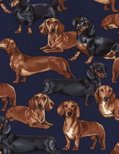 Dachshunds on Navy Fabric / Timeless Treasures GM-C3190 - Navy /Dog Fabric / Doxies on Navy / Fat Quarter, 1/2 Yard by SewWhatQuiltShop on Etsy