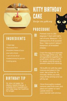 Kitty birthday cake recipe! Make this easy and yummy cake for cat on her birthday. As your cat ages, her dietary and health needs tend to change. Ask us for a suitable remedy for your cat!
