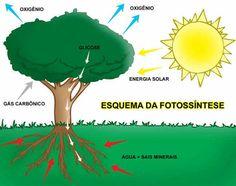 Resultado de imagem para fotossintese
