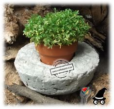 Edible Decor - Edible Gift Gifts - Edible Favour Favours - This Concrete Pot Pots Papercrete Pot contains a small terracotta pot filled with cotton wool and planted with watercress. Plant any herb in cotton wool and let your guest harvest a herb chosen and planted to compliment your menu at the table. The Concrete or Papercrete pot/bowl can be reused for anything you chose to. Suitable to be use Indoors and Outdoors.