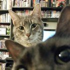 I was trying to take a nice photo of my cat but then his brother suddenly photobombed him