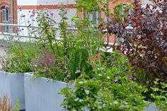 Bepflanzung Dachterrasse, Dachgarten
