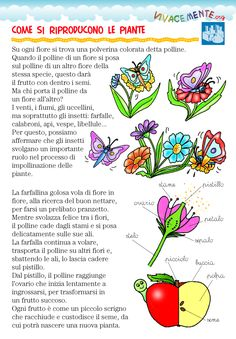 Learning Italian Like Children Primary Science, Science For Kids, Science And Technology, Activities For Kids, Plant Science, Science Biology, Experiment, Planting For Kids, Baby Words