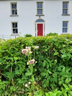 Abhainn Ri Farmhouse garden is getting more colourful by the day. Farmhouse Garden, Evening Meals, Guest Bedrooms, How To Make Bread, Bed And Breakfast, Herbs, Outdoor Structures, Landscape, Plants