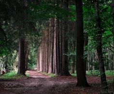 On the forest road - Pinned by Mak Khalaf Nature Ukrainebeautifulbeautyforestgreenroadsummertraveltreetrees by kivlusko